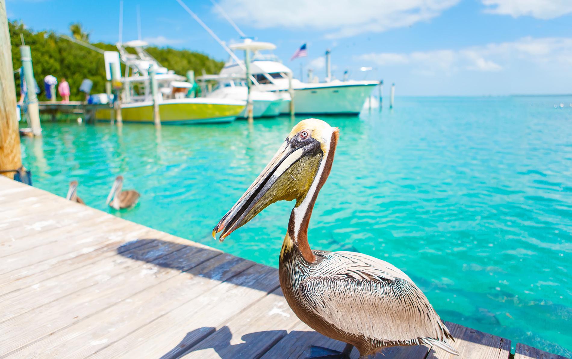 Florida Keys : Key Largo, Islamorada et Marathon